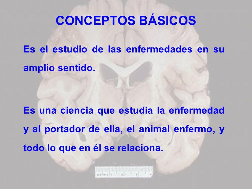 CONCEPTOS BÁSICOS Es el estudio de las enfermedades en su amplio sentido.