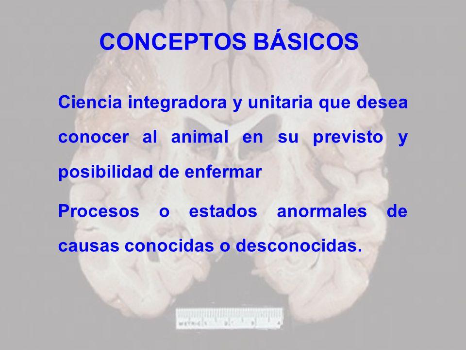 CONCEPTOS BÁSICOS Ciencia integradora y unitaria que desea conocer al animal en su previsto y posibilidad de enfermar.