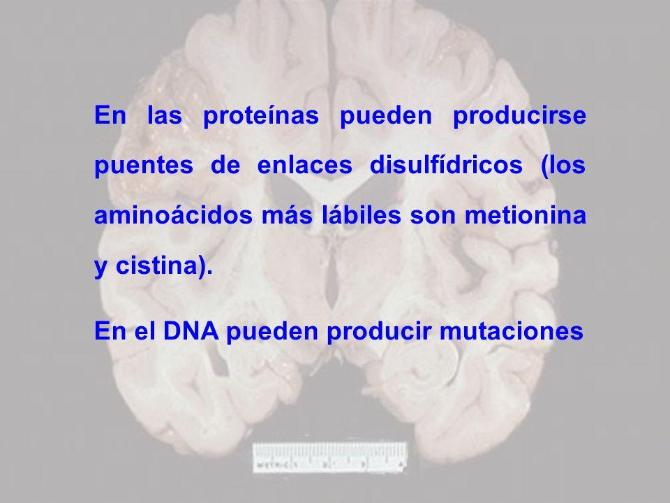 En las proteínas pueden producirse puentes de enlaces disulfídricos (los aminoácidos más lábiles son metionina y cistina).