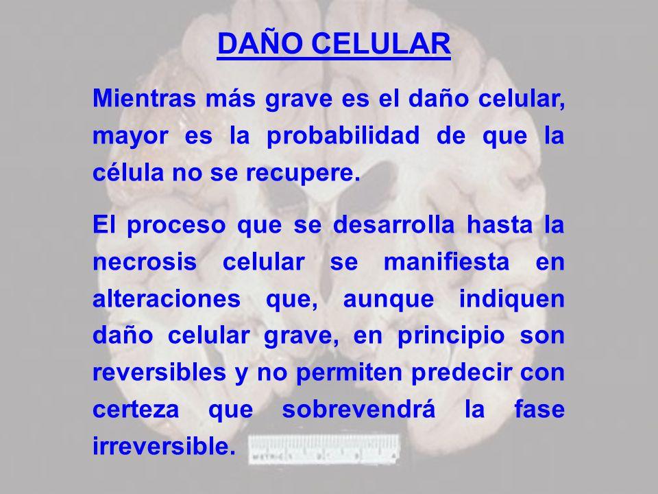 DAÑO CELULAR Mientras más grave es el daño celular, mayor es la probabilidad de que la célula no se recupere.
