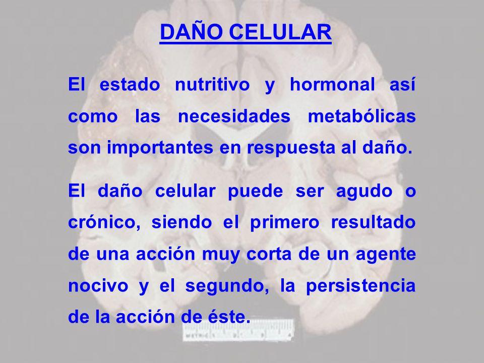 DAÑO CELULAR El estado nutritivo y hormonal así como las necesidades metabólicas son importantes en respuesta al daño.