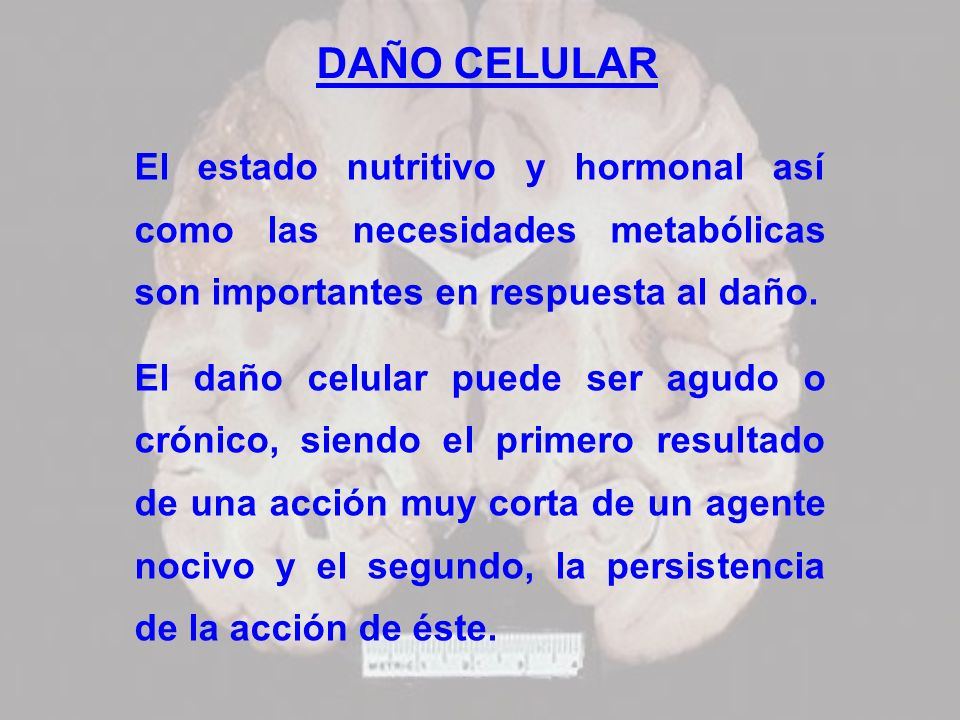 DAÑO CELULAREl estado nutritivo y hormonal así como las necesidades metabólicas son importantes en respuesta al daño.