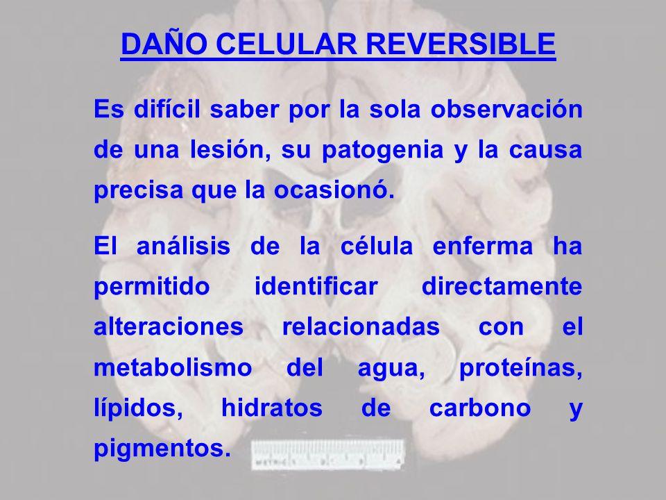 DAÑO CELULAR REVERSIBLE