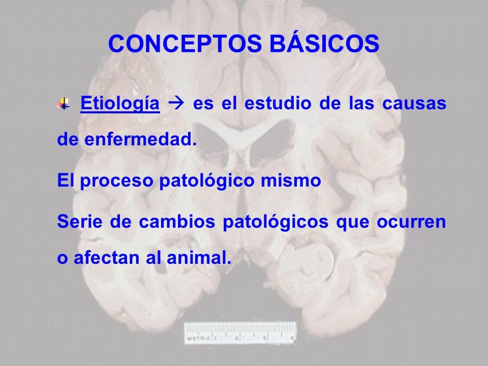 CONCEPTOS BÁSICOS Etiología  es el estudio de las causas de enfermedad. El proceso patológico mismo.