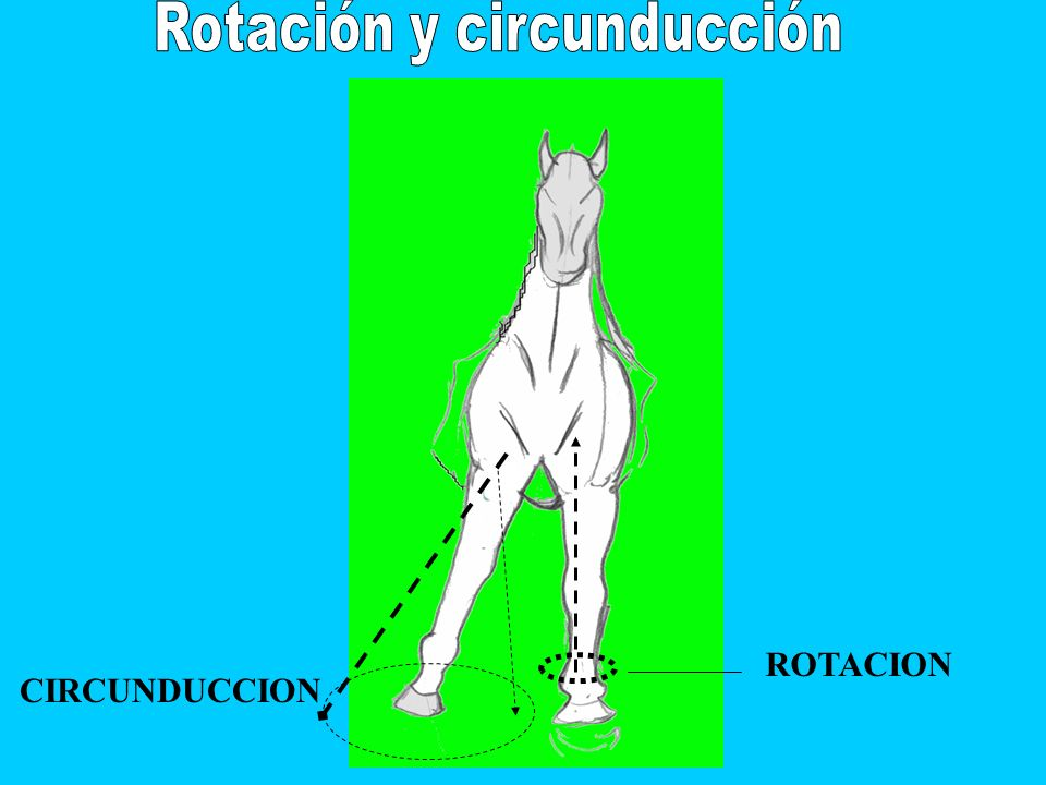 Rotación y circunducción