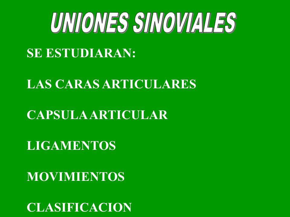 UNIONES SINOVIALES SE ESTUDIARAN: LAS CARAS ARTICULARES
