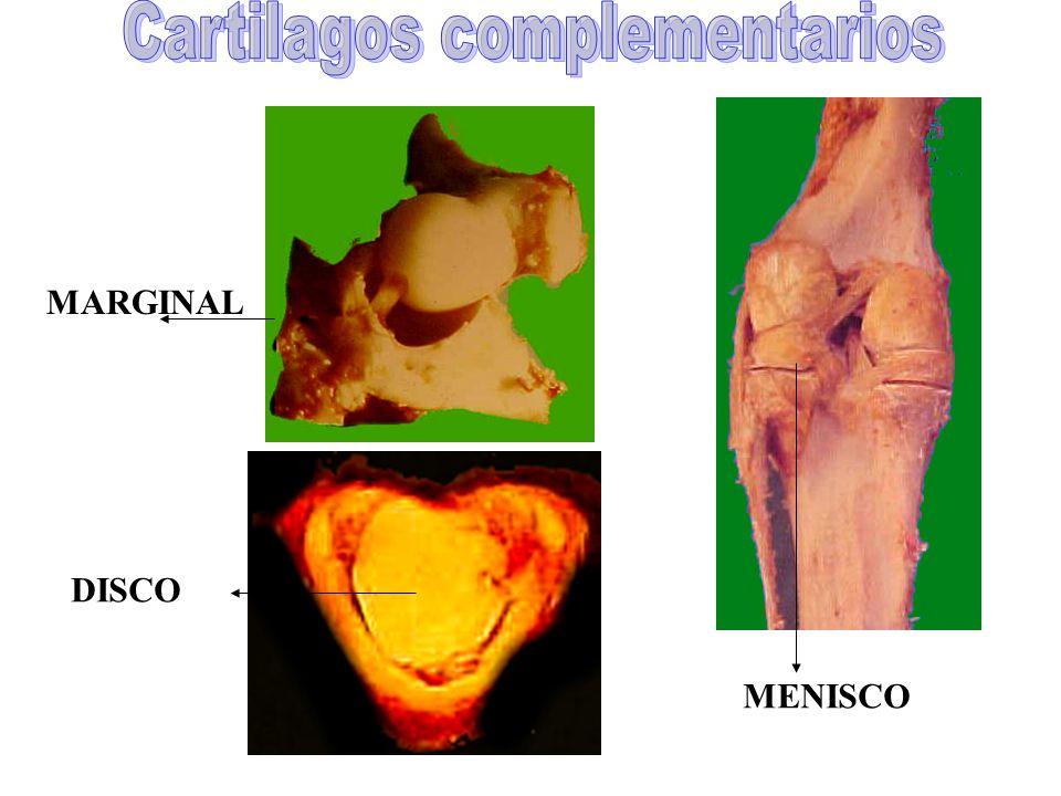 Cartilagos complementarios
