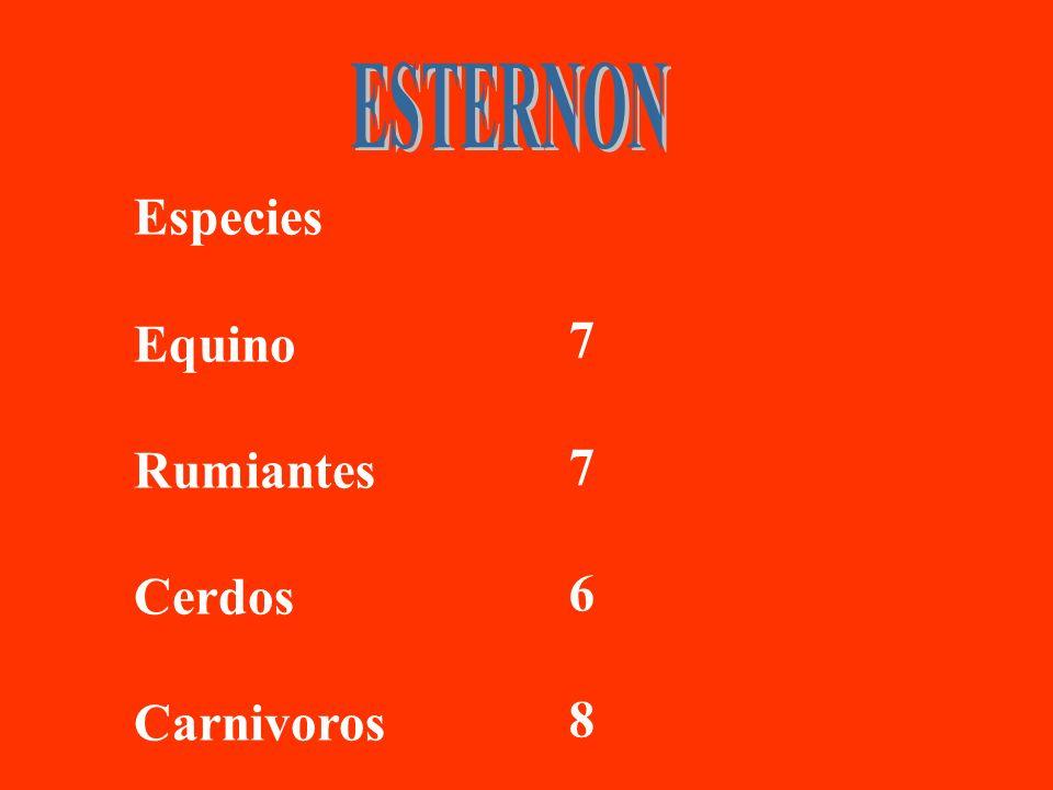 ESTERNON Especies Equino Rumiantes Cerdos Carnivoros 7 6 8