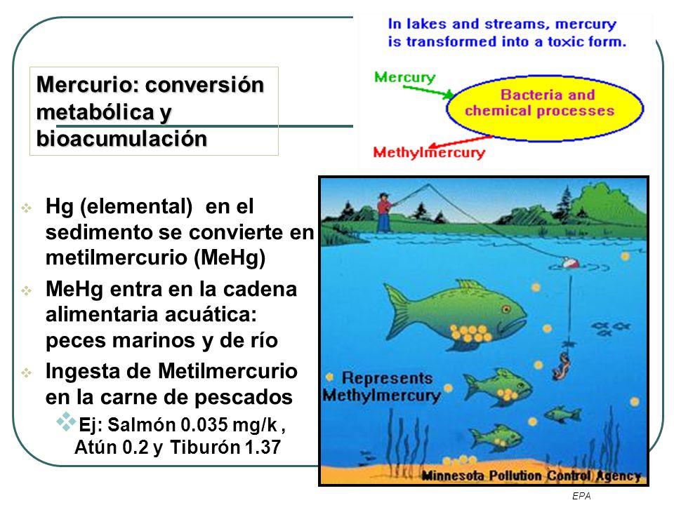 Mercurio: conversión metabólica y bioacumulación