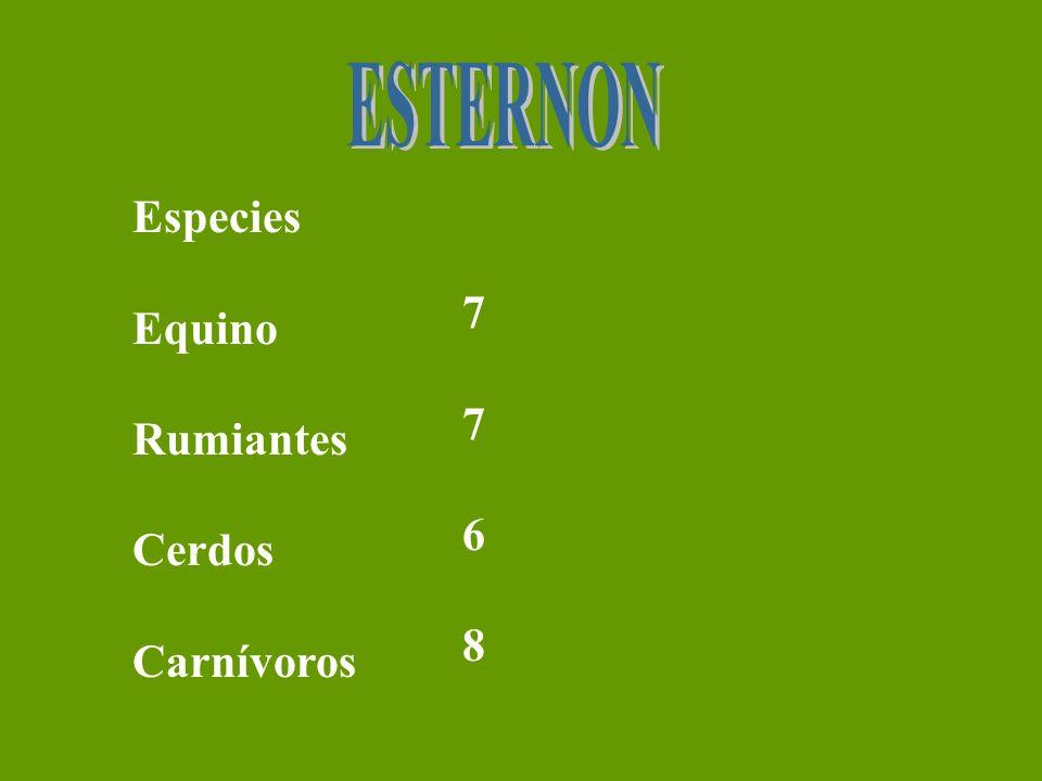 ESTERNON Especies Equino Rumiantes Cerdos Carnívoros 7 6 8