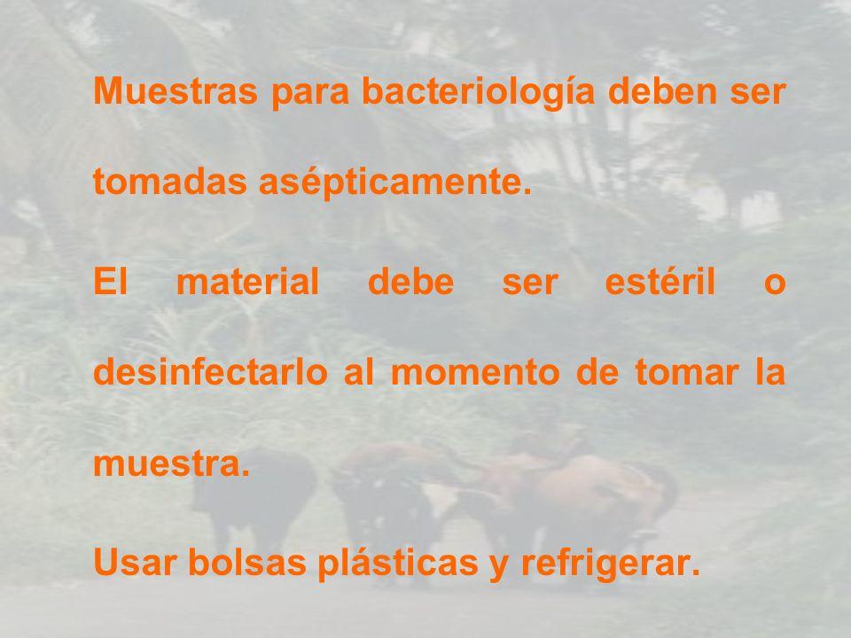 Muestras para bacteriología deben ser tomadas asépticamente.