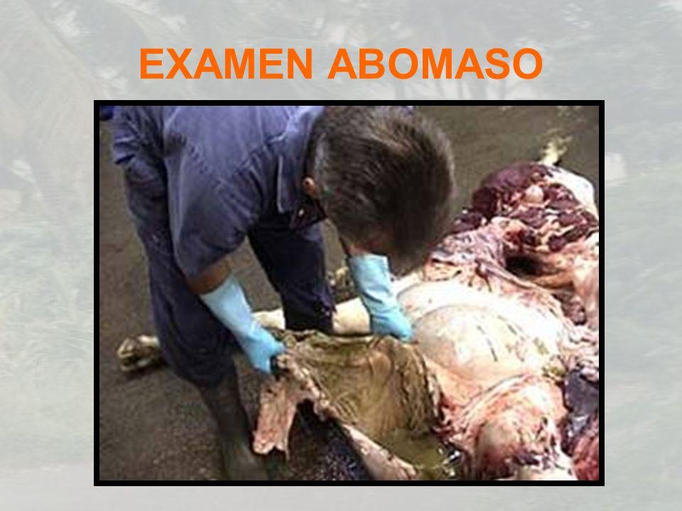 EXAMEN ABOMASO