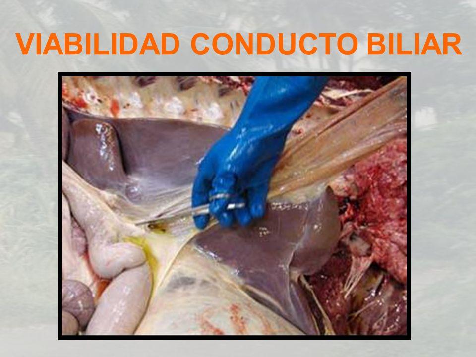 VIABILIDAD CONDUCTO BILIAR