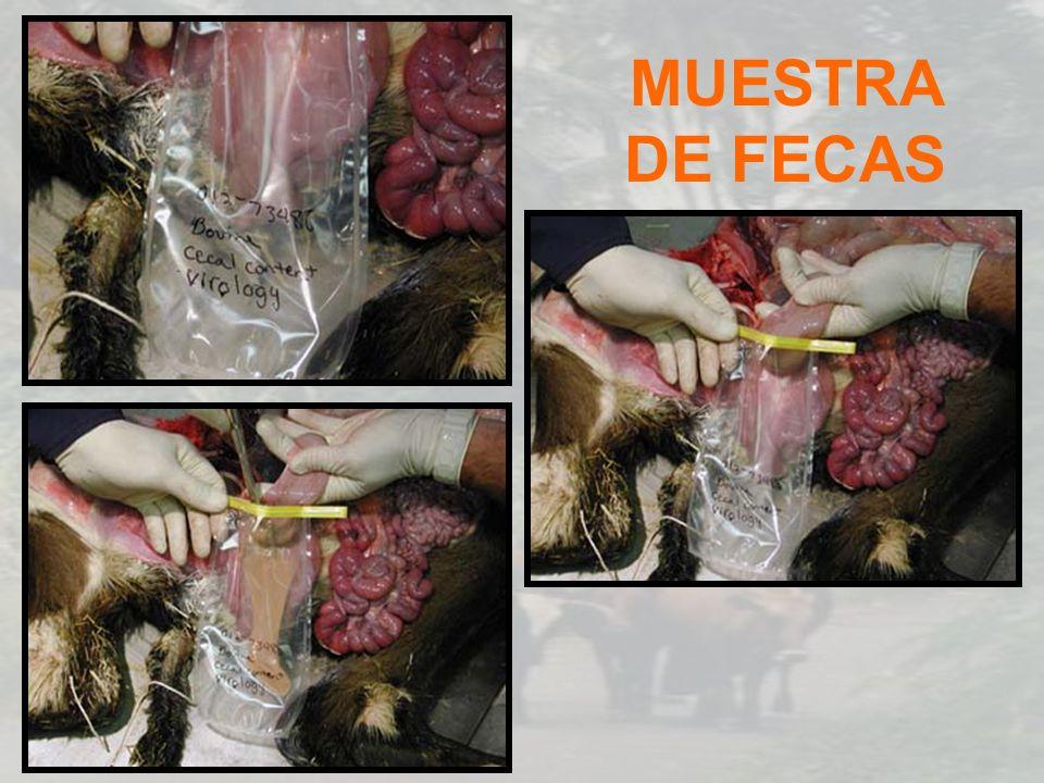 MUESTRA DE FECAS
