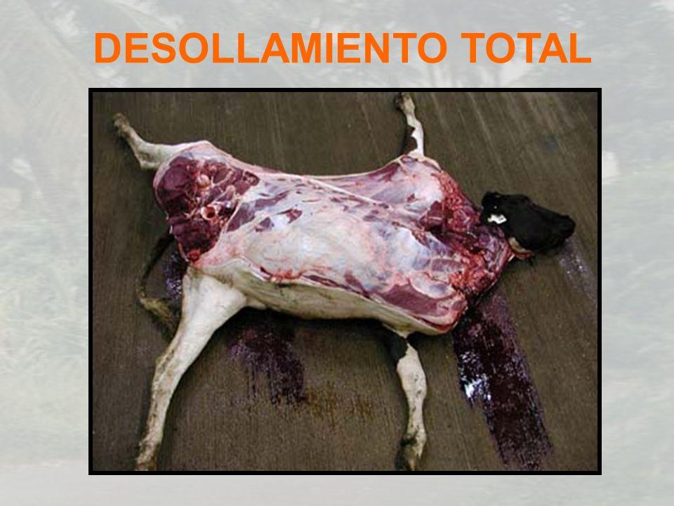 DESOLLAMIENTO TOTAL