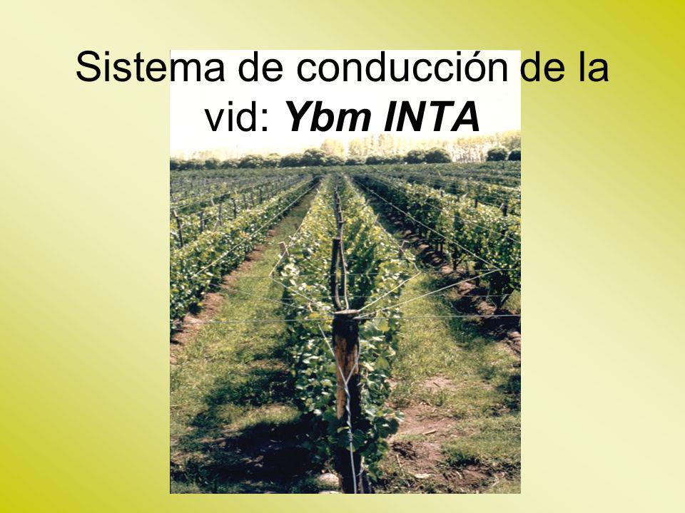 Sistema de conducción de la vid: Ybm INTA