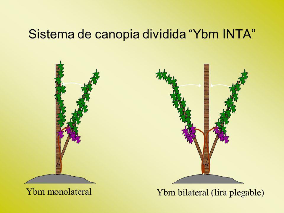 Sistema de canopia dividida Ybm INTA