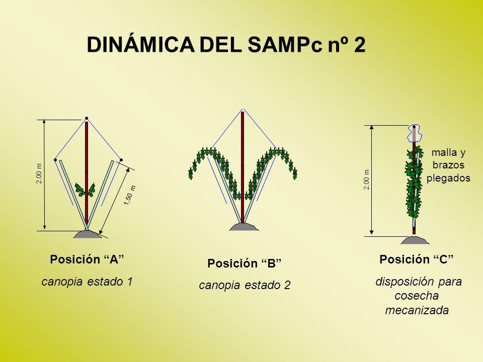 DINÁMICA DEL SAMPc nº 2 ' Posición B canopia estado 2 ' '