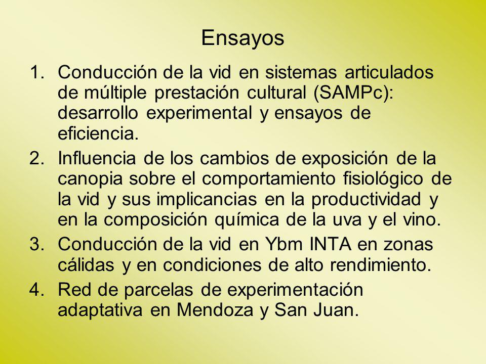 Ensayos Conducción de la vid en sistemas articulados de múltiple prestación cultural (SAMPc): desarrollo experimental y ensayos de eficiencia.