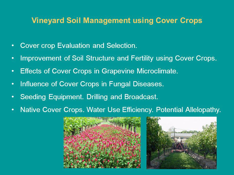 Vineyard Soil Management using Cover Crops