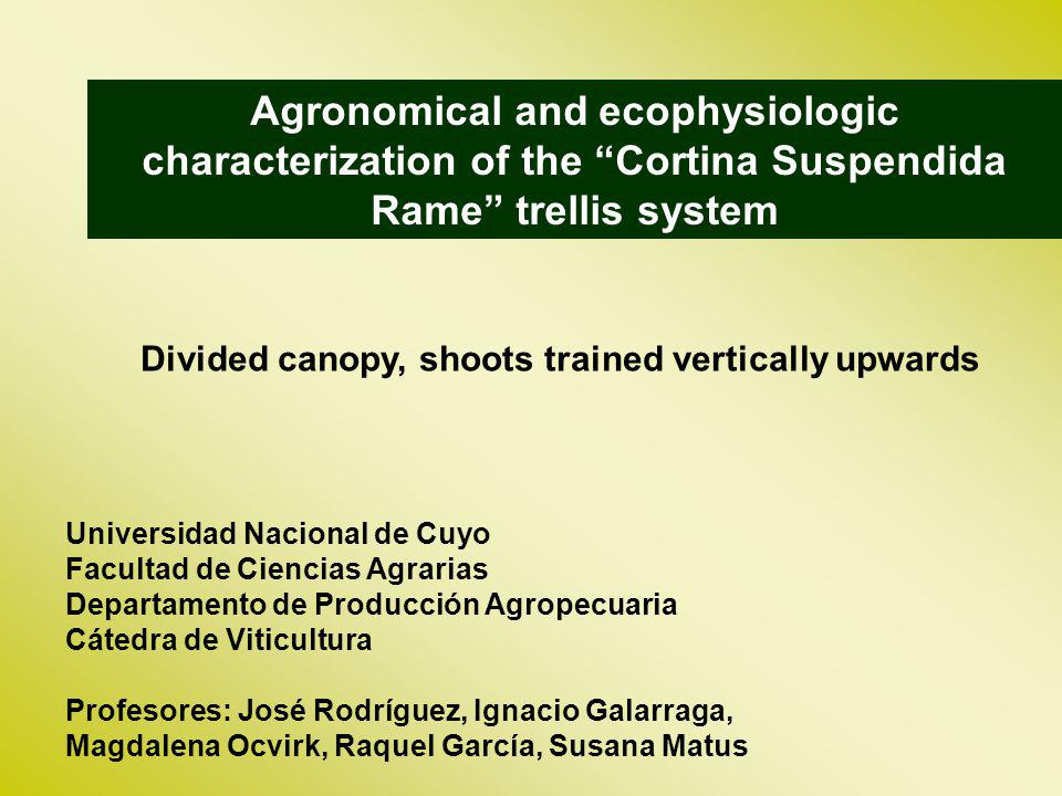 Agronomical and ecophysiologic characterization of the Cortina Suspendida Rame trellis system