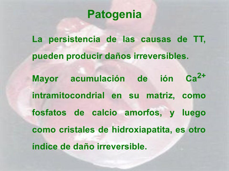 Patogenia La persistencia de las causas de TT, pueden producir daños irreversibles.