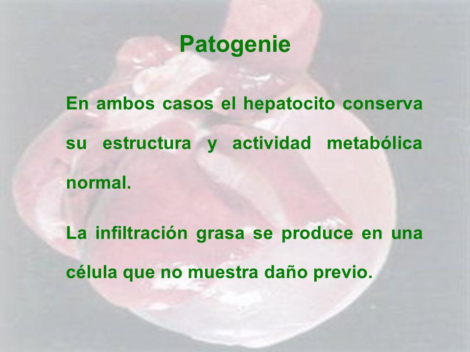 Patogenie En ambos casos el hepatocito conserva su estructura y actividad metabólica normal.