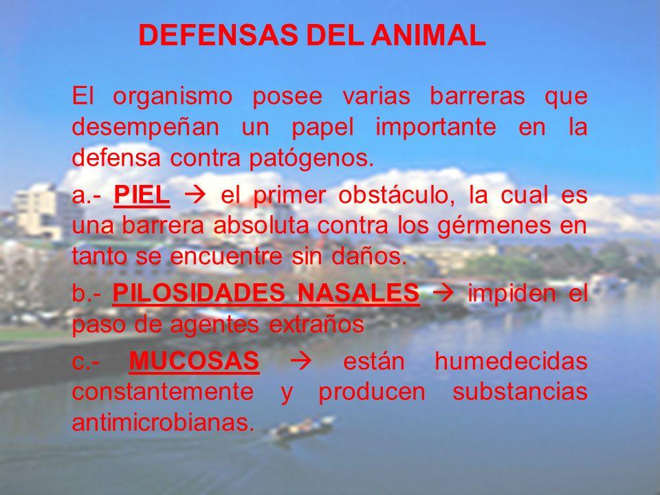 DEFENSAS DEL ANIMAL El organismo posee varias barreras que desempeñan un papel importante en la defensa contra patógenos.