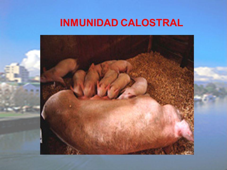 INMUNIDAD CALOSTRAL