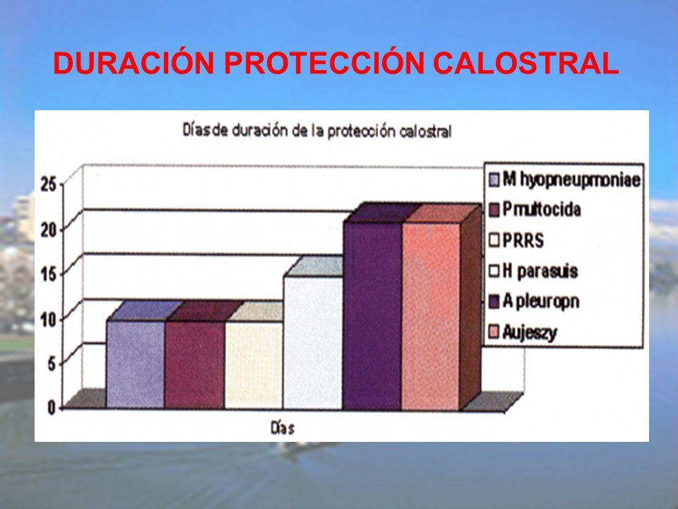 DURACIÓN PROTECCIÓN CALOSTRAL