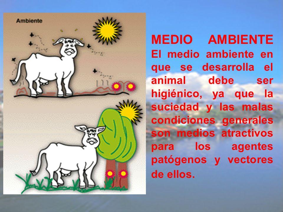 MEDIO AMBIENTE El medio ambiente en que se desarrolla el animal debe ser higiénico, ya que la suciedad y las malas condiciones generales son medios atractivos para los agentes patógenos y vectores de ellos.