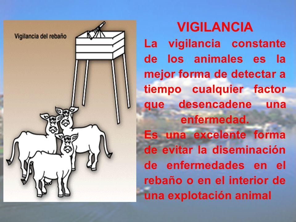 VIGILANCIA La vigilancia constante de los animales es la mejor forma de detectar a tiempo cualquier factor que desencadene una enfermedad.