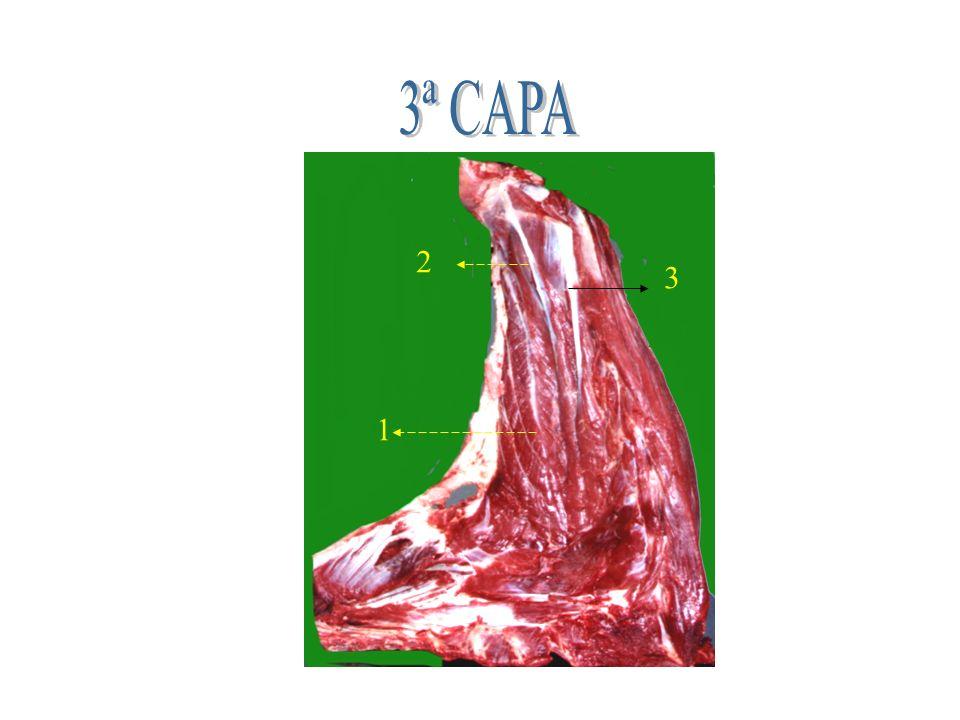 3ª CAPA 2 3 1