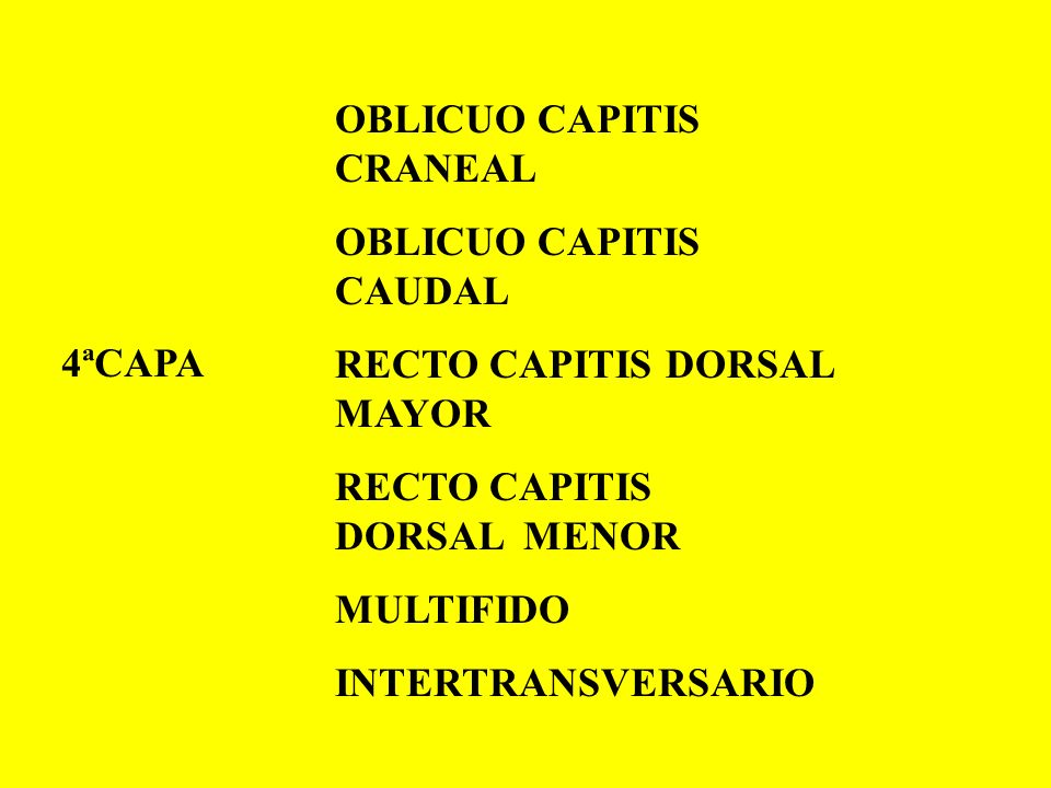OBLICUO CAPITIS CRANEAL