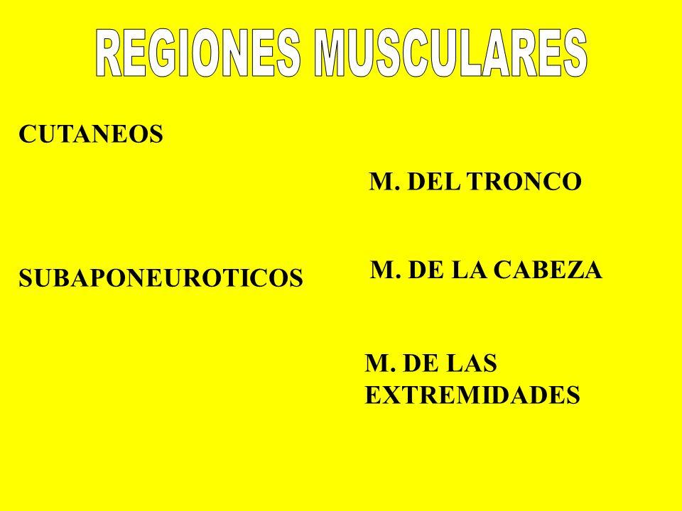 REGIONES MUSCULARES CUTANEOS M. DEL TRONCO M. DE LA CABEZA