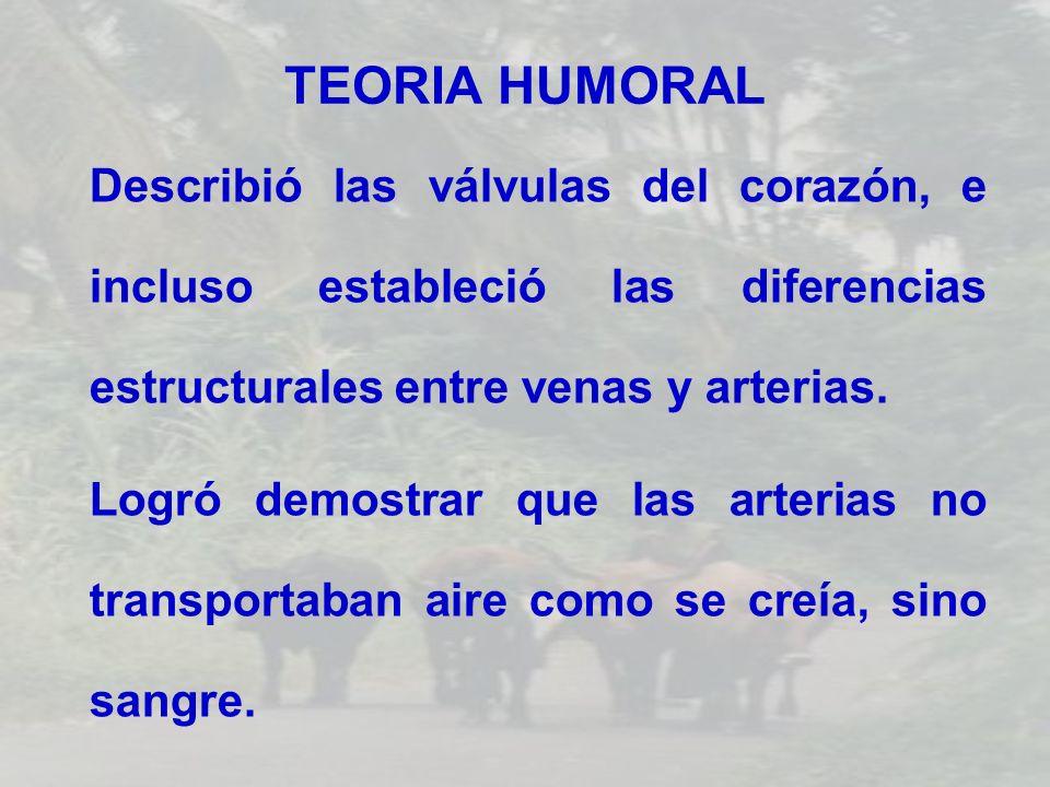 TEORIA HUMORAL Describió las válvulas del corazón, e incluso estableció las diferencias estructurales entre venas y arterias.