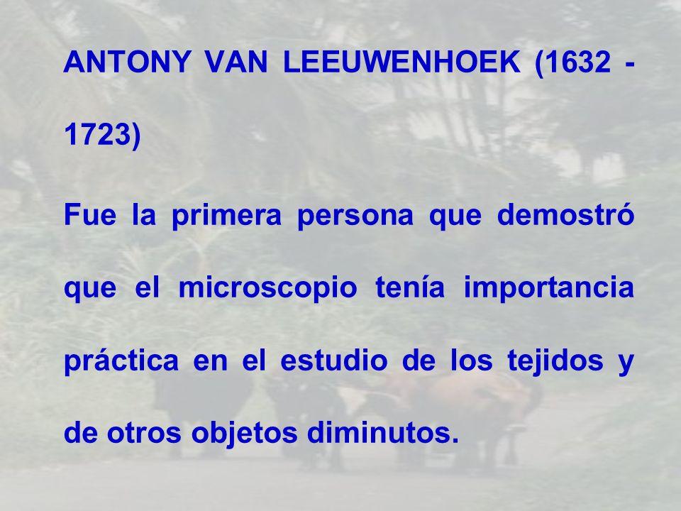 ANTONY VAN LEEUWENHOEK (1632 - 1723)
