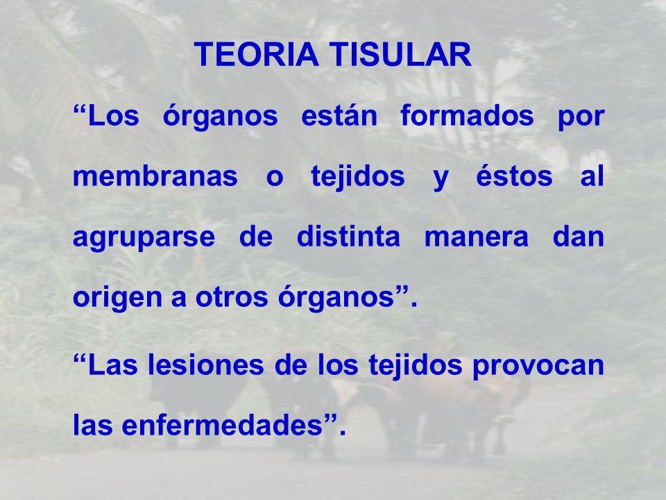 TEORIA TISULAR Los órganos están formados por membranas o tejidos y éstos al agruparse de distinta manera dan origen a otros órganos .