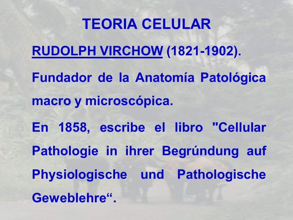 TEORIA CELULAR RUDOLPH VIRCHOW (1821-1902).