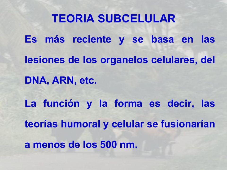 TEORIA SUBCELULAREs más reciente y se basa en las lesiones de los organelos celulares, del DNA, ARN, etc.