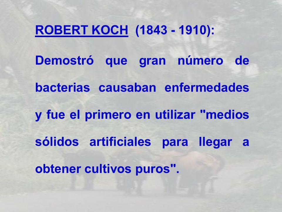 ROBERT KOCH (1843 - 1910):