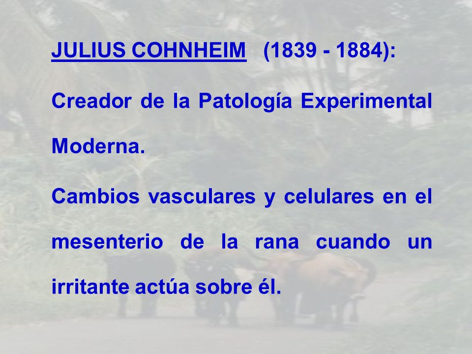 JULIUS COHNHEIM (1839 - 1884):Creador de la Patología Experimental Moderna.