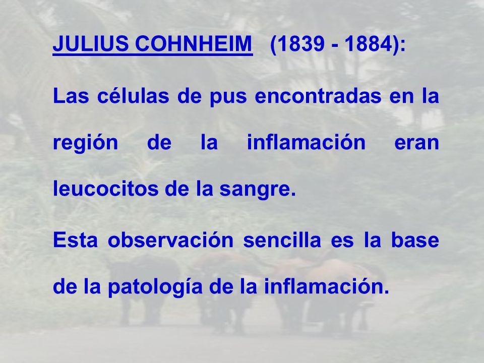 JULIUS COHNHEIM (1839 - 1884):Las células de pus encontradas en la región de la inflamación eran leucocitos de la sangre.