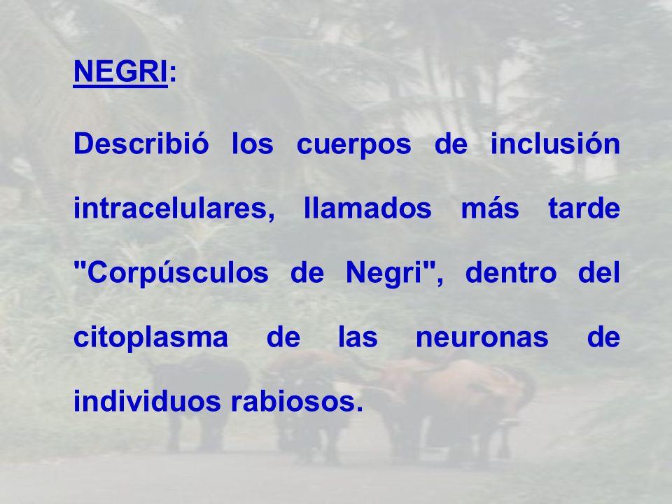 NEGRI: