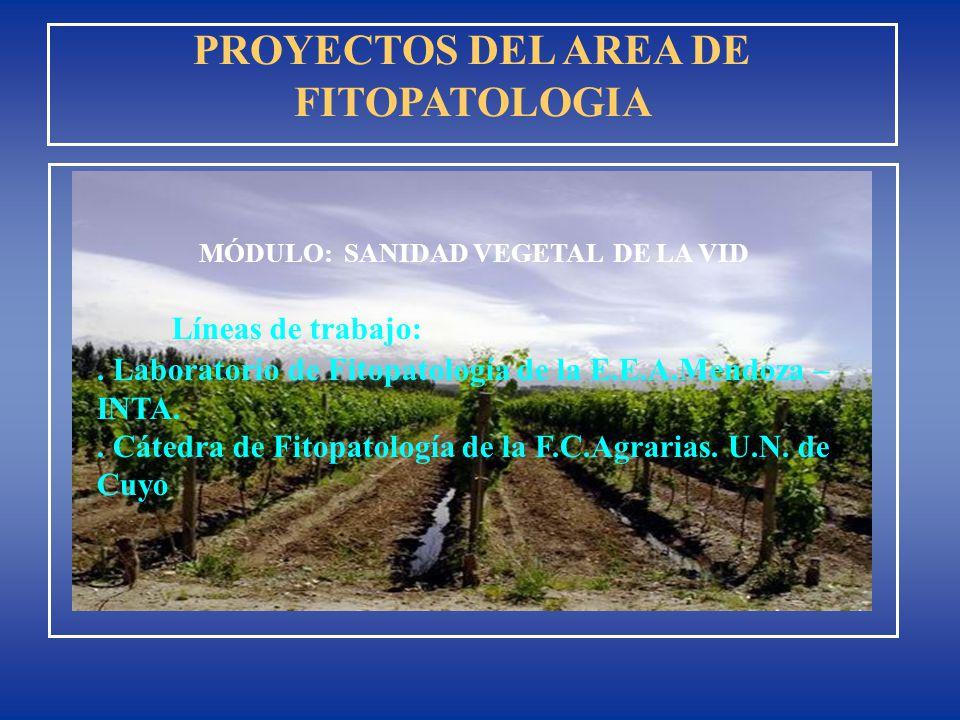 PROYECTOS DEL AREA DE FITOPATOLOGIA MÓDULO: SANIDAD VEGETAL DE LA VID