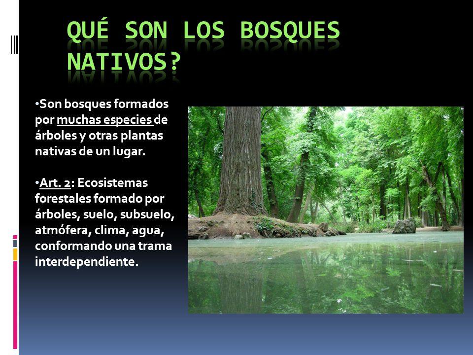 Qué son los bosques nativos