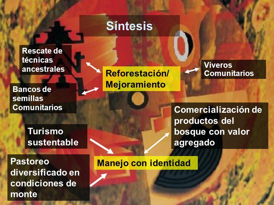 Síntesis Reforestación/ Mejoramiento