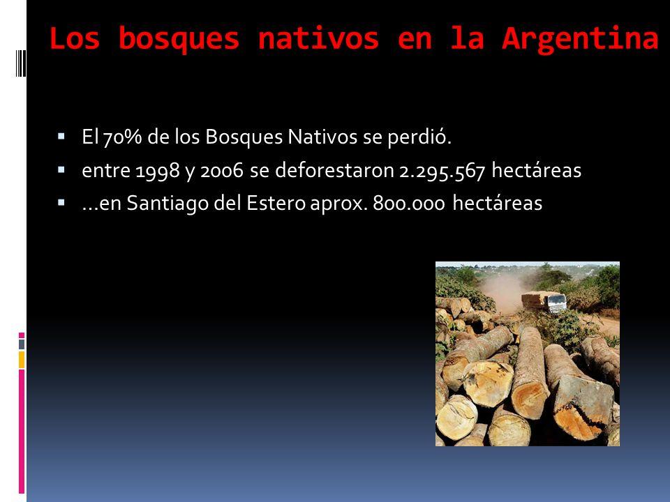 Los bosques nativos en la Argentina