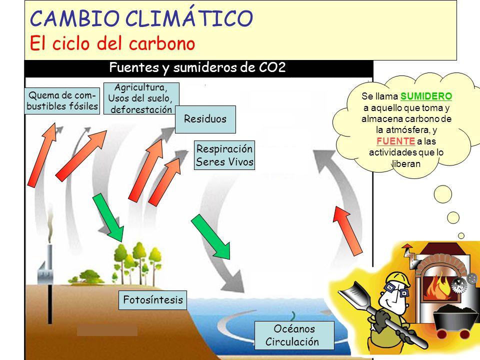 CAMBIO CLIMÁTICO El ciclo del carbono