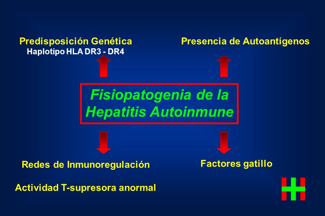 Fisiopatogenia de la Hepatitis Autoinmune